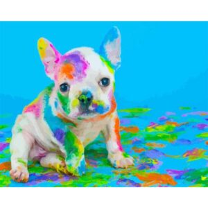 Dog Playing with Colors